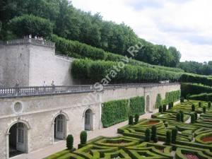 Липовые аллеи на террасах. Франция. Июль 2009.
