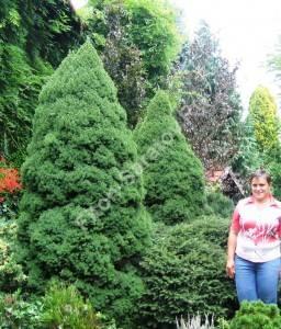 На фото: Самые крупные Коники, которые мне приходилось видеть лично. Август 2008. Польша.