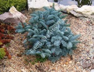 Молодое растение в композиции. Август 2008.