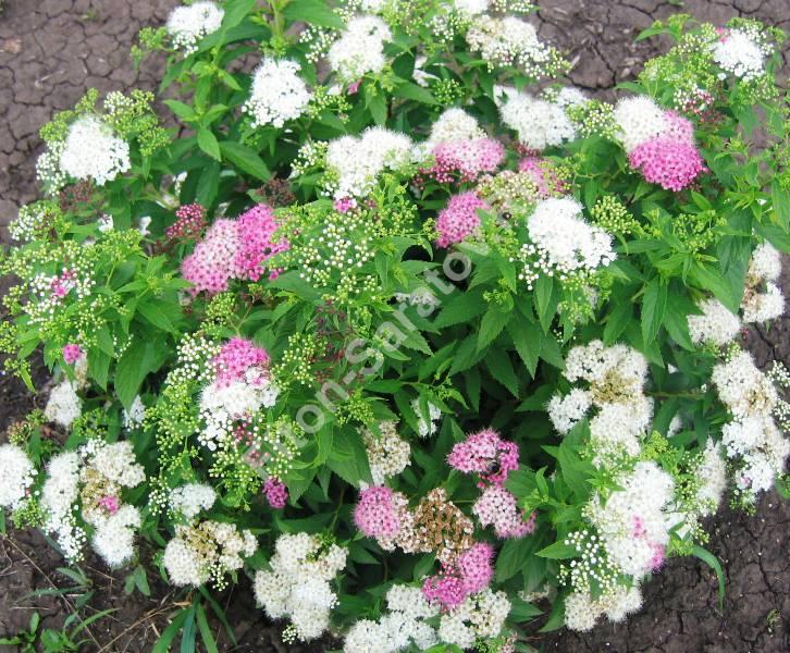 Питомник декоративных растений фитон